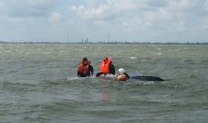 Search and Rescue radioverkeer 23 juni 2012